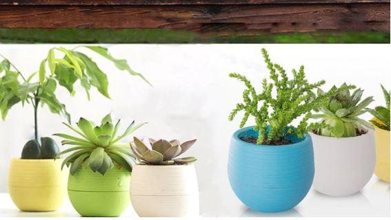 Một số loại cây phù hợp trồng trong chậu cây mini để bàn