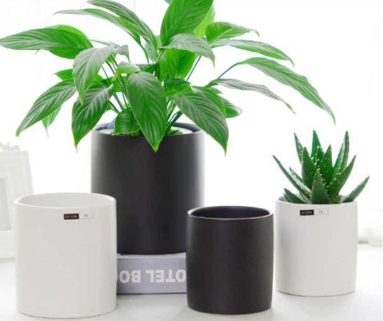Chậu trồng cây để bàn đẹp từ vật liệu composite