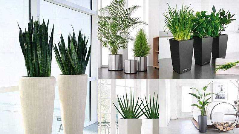 Chậu composite dùng để trồng cây cảnh