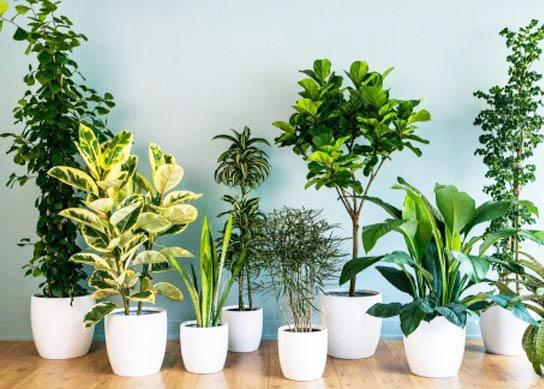 Nếu đặt chậu cây đúng vị trí – vượng khí cả năm